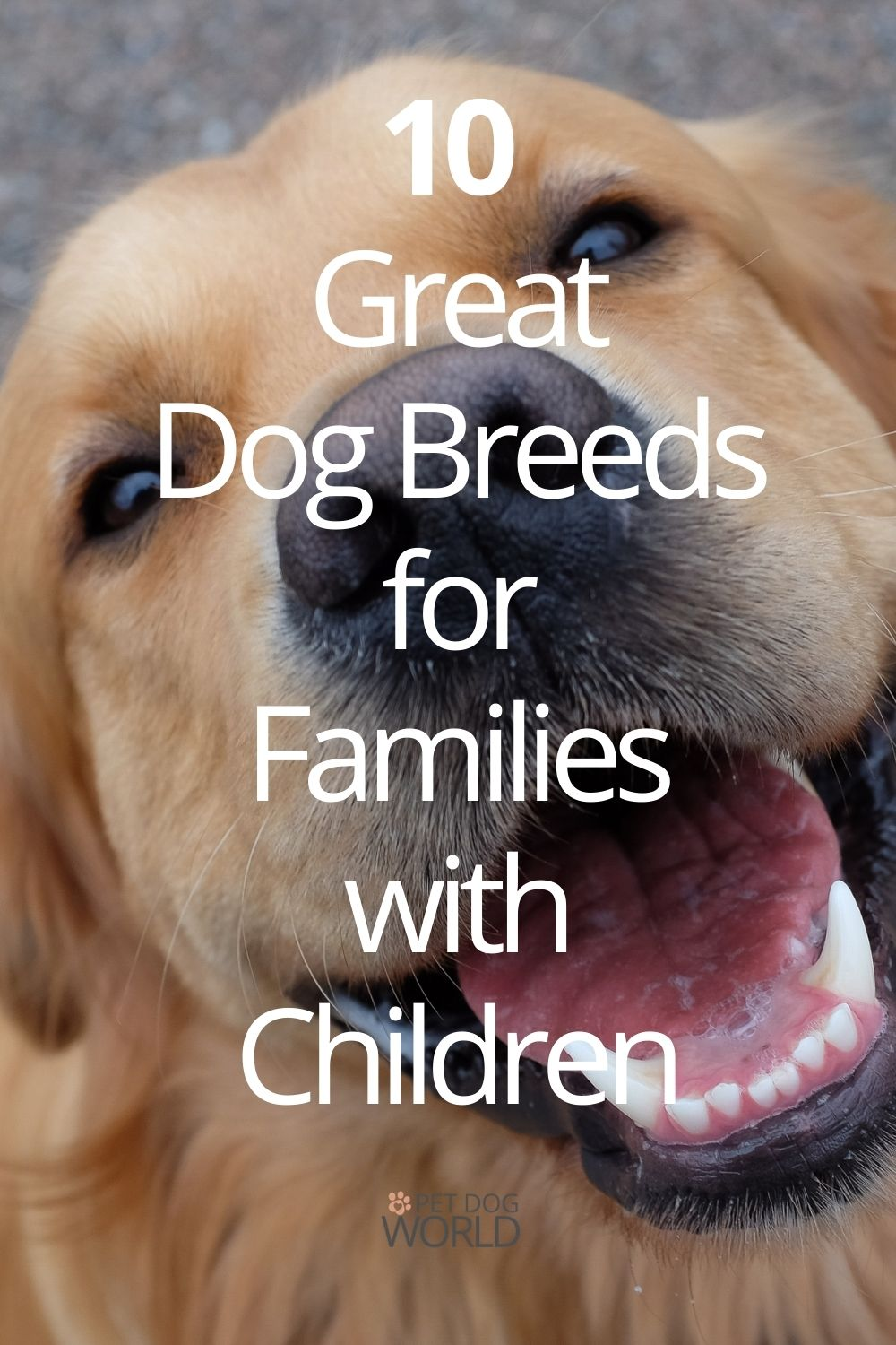 10 Great Dog Breeds for Families with Children
