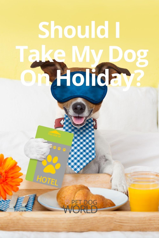 Should I take my dog on holiday?