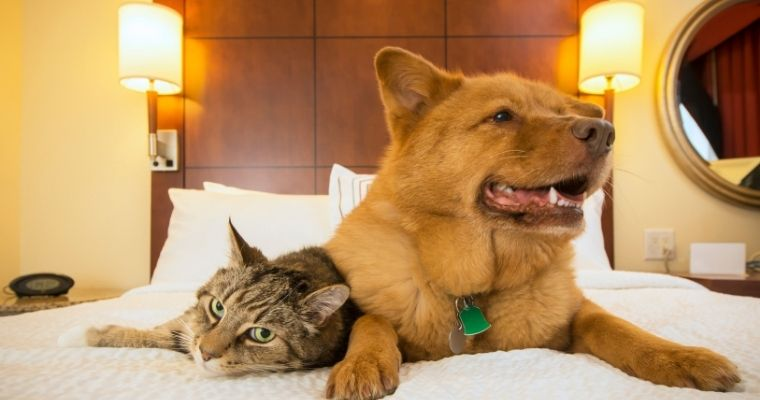 Dog and cat relaxing on a hotel bed