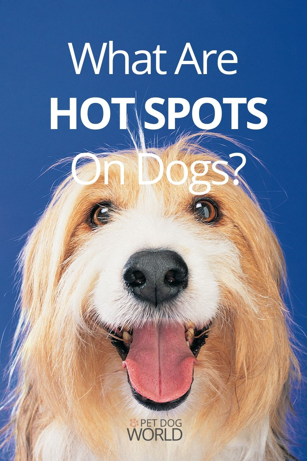 What are hot spots on dogs?