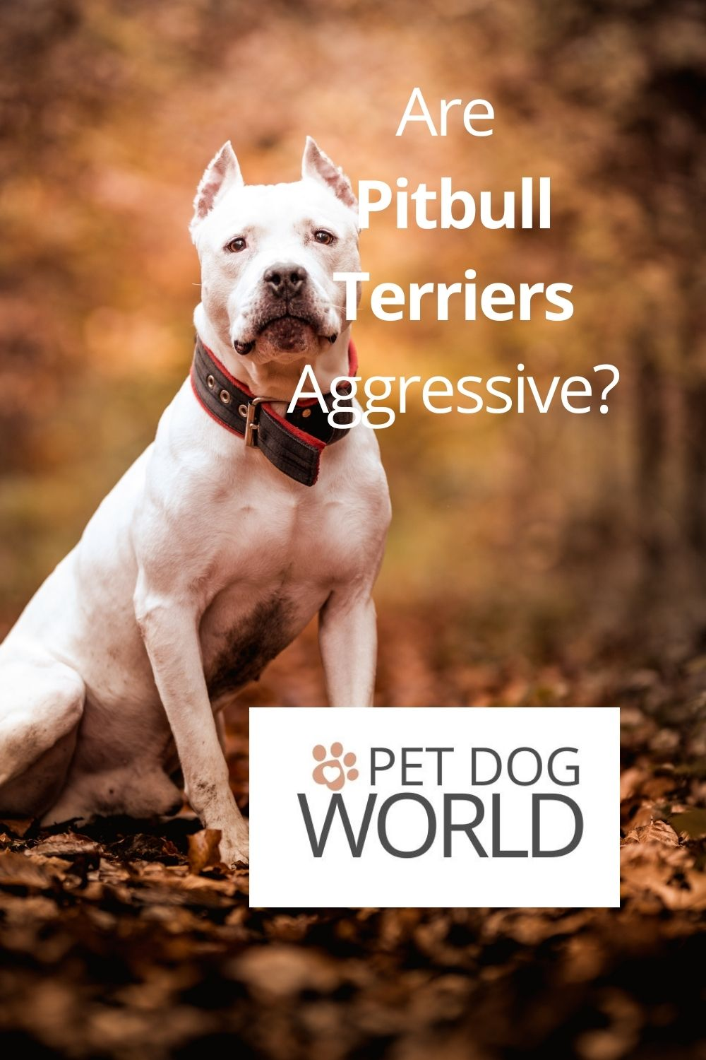 Experts agree that it is the owner responsibility (or the lack thereof) that determines the social capabilities and behaviour of any dog, not just Pitbull types.