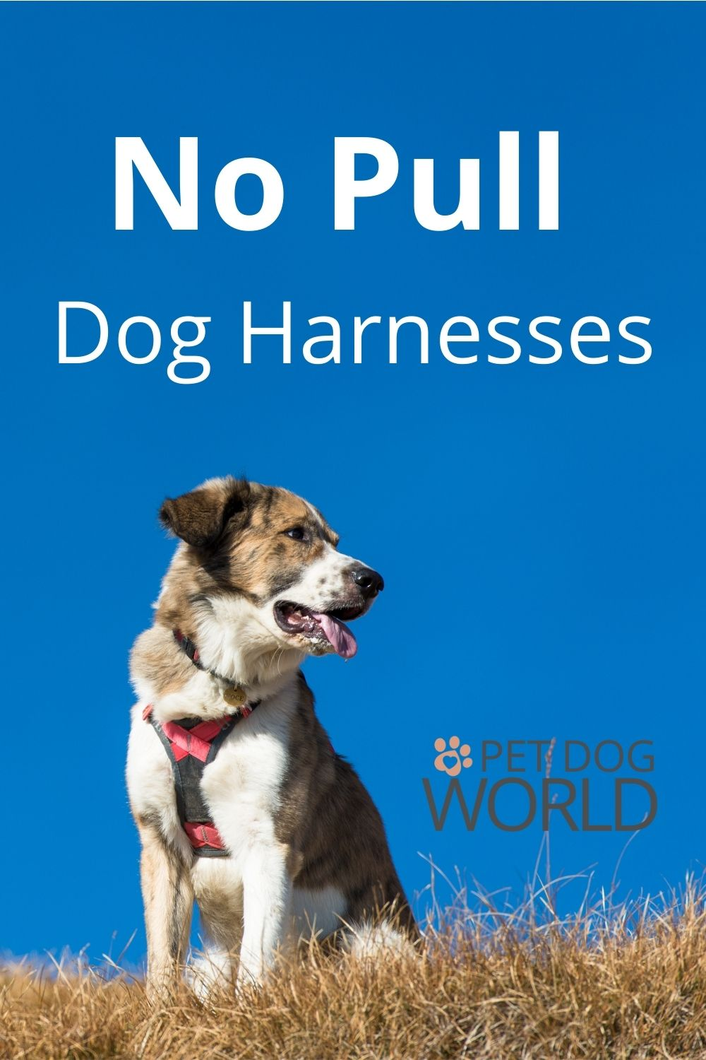 If your dog pulls on the lead, conventional collars can hurt your dog's neck. The answer is to invest in a no pull dog harness for a more pleasurable and safer walk.