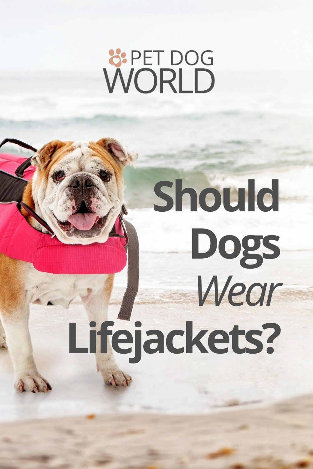 If you're going on holiday or anywhere with deep water or water with strong currents, you should consider getting your dog a life jacket.