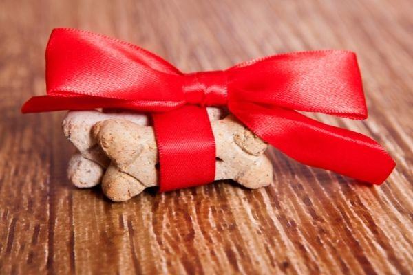 Start A Dog Treat Business