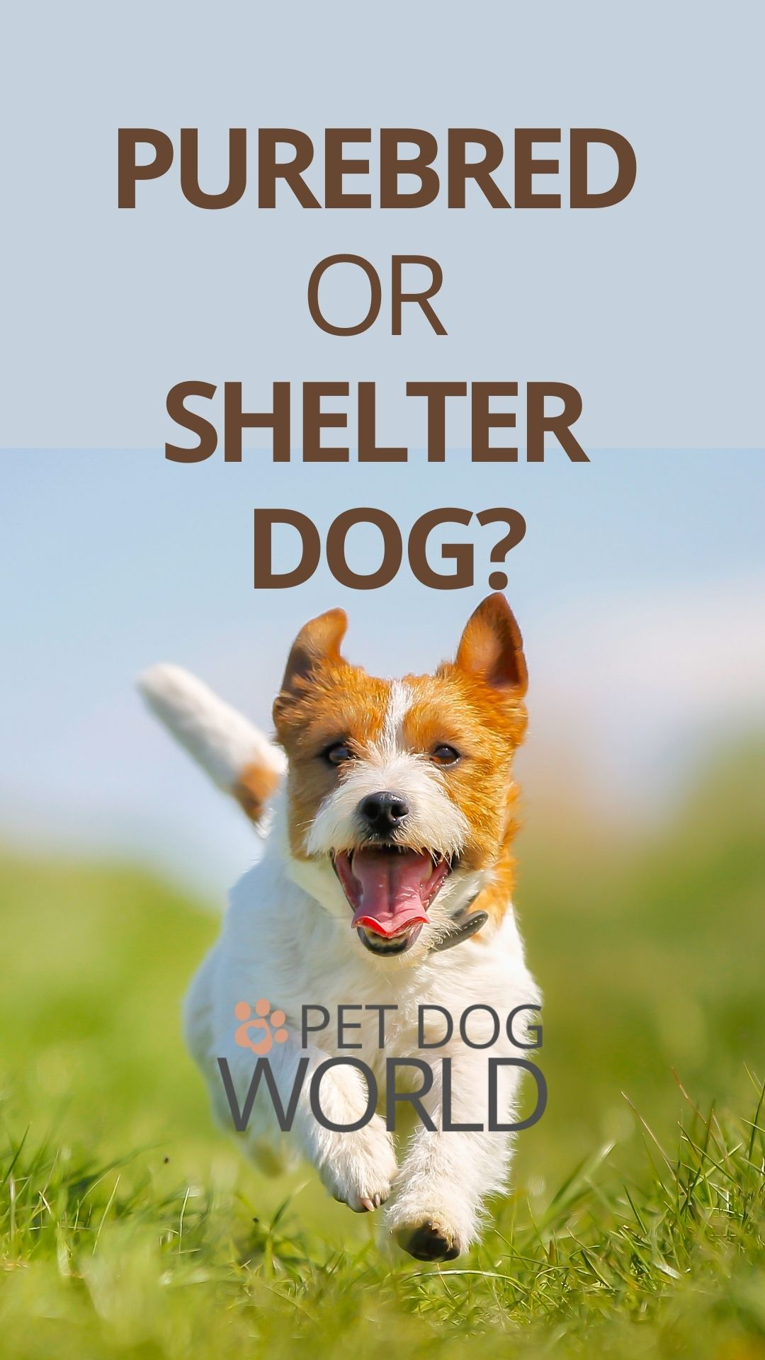Purebred or shelter dog? Helping you to choose.