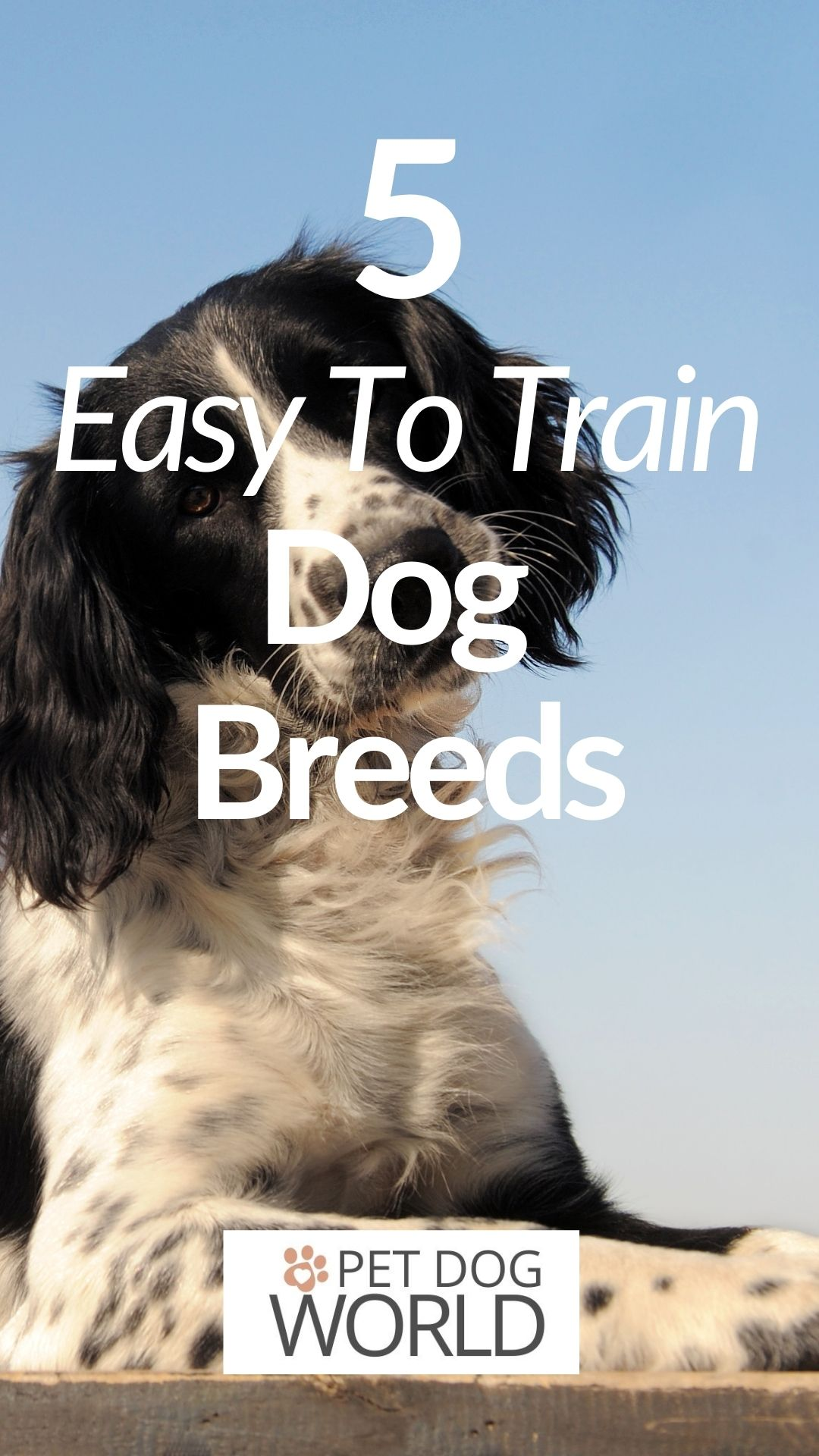Between so many choices, sometimes it can be hard to choose the ideal breed. But here are 5 of the most trainable dogs.