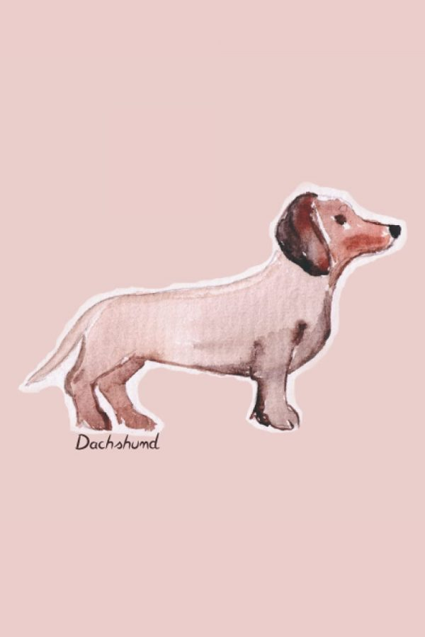 Contains 100 pages with a dachshund on each of the interior pages.