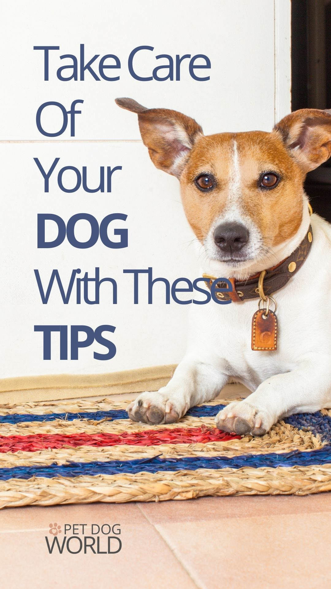 Follow these tips to take good care of your dog.