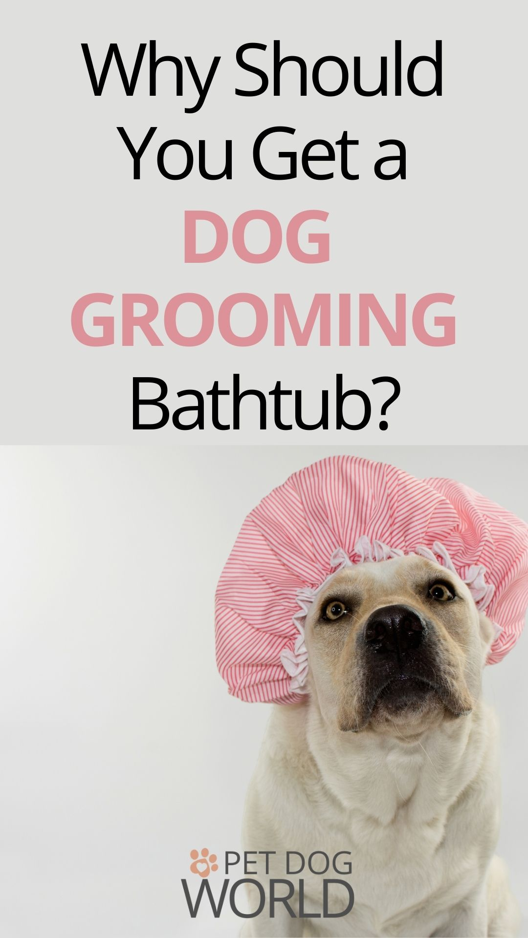 There's nothing better than spending time with your dog and getting him cleaned up at the same time. To do this more efficiently, you should get a bathtub just for your faithful friend.